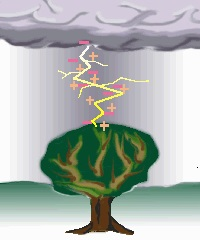 tree3ani_0